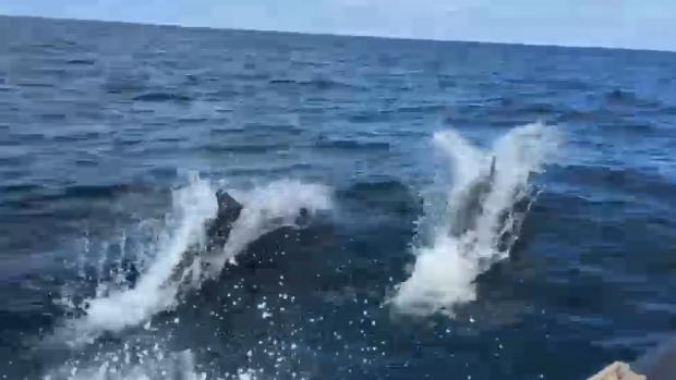 Bijzondere ontmoeting met dolfijnen in Noordzee